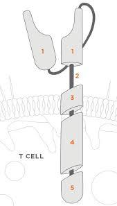car t chimeric antigen receptor technology juno therapeutics