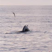whaletrip iceland the land of fire and ice whaletrips org
