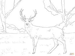 whitetail deer head coloring pages coloring pages for whitetail deer coloring pages jpg