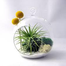 spiral air plant terrarium u2013 sea u0026 asters