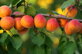 the five easiest fruit trees to grow the garden