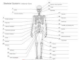 Skeletal Picture Of Foot Skeletal System Diagram Types Of Skeletal System Diagrams
