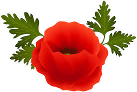 poppy png clip art image gallery yopriceville high quality