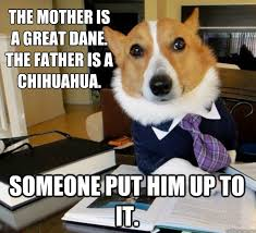 Great Dane Meme - the mother is a great dane the father is a chihuahua someone put