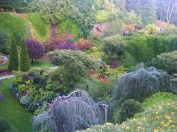 plants i u0027ve killed hortophile u2013 my new garden