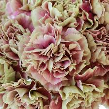 Wholesale Carnations Save On These Crazy Cool Carnations Pink Carnations Flowers