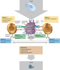immunogenicity of pluripotent stem cells and their derivatives