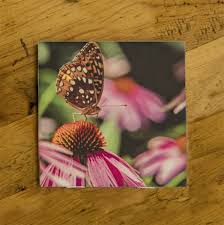 butterfly on a coneflower photo ceramic coaster by koral martin