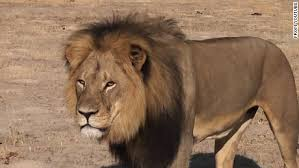 cecil lion u0027s son killed game hunter cnn