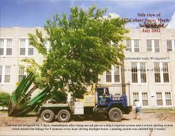 tree ark large tree moving and large trees for sale