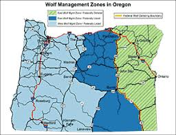 odfw gray wolves