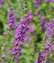 Names And Images Of Flowers - best 25 purple flower names ideas on pinterest purple names