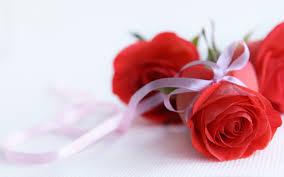 wallpaper flower red rose rose flower wallpaper hd pixelstalk net