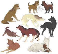 wolf sketches 1 by diazrar on deviantart