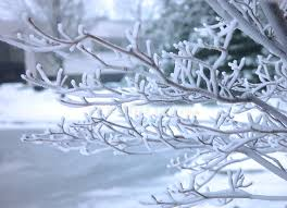 frosted tree brunch stock image image of background 330467