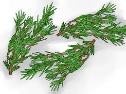 Most Fragrant Indoor Plants How To Grow Rosemary Indoors With Pictures Wikihow