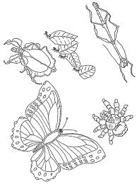 Coloriage Insectes  Insectes