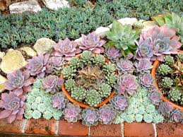 Ideas For Indoor Succulents Design Garden Design With Beautiful Flower Landscaping Ideas To Complete