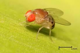 Small Flies In Bathroom Sink Fly Exterminators Flies Pest Control Service By Planet Orange