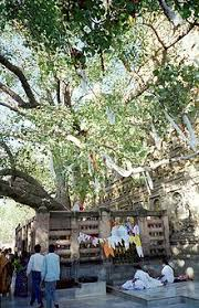 bodhi tree simple the free encyclopedia