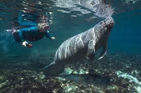 Florida snorkeling images Florida photo gallery sea for yourself snorkeling safaris jpg