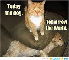 Mean Cat Memes - 1000 images about mean cats on pinterest mean cat grumpy cat