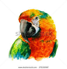 hand drawn parrot head macaw watercolor stock vector 270150587