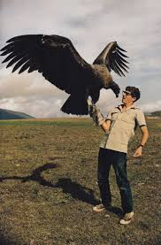 best 25 andean condor ideas on pinterest national geographic