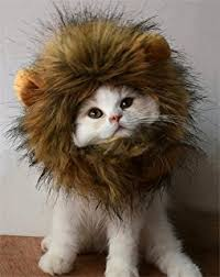 Halloween Costumes Cats Wear Amazon Dogloveit Pet Costume Lion Mane Wig Dog Cat
