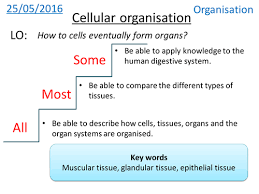 cell specialisation and differentiation new gcse biology b1 aqa