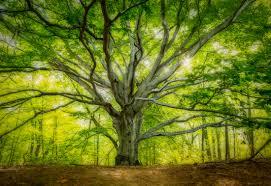 tree chris harnish photography