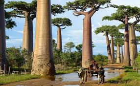 12 most beautiful trees in the world