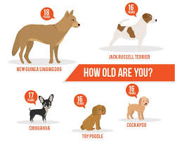 lifespan of belgian shepherd lifespan of a dog a dog years chart by breed