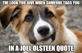 Confused Dog Meme - confused dog meme generator imgflip