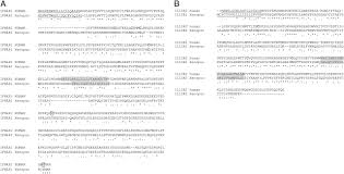 Resume Sample Grocery Store by Intron Containing Type I And Type Iii Ifn Coexist In Amphibians