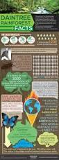daintree rainforest facts u0026 interesting information experience oz
