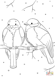 winter birds coloring page free printable coloring pages