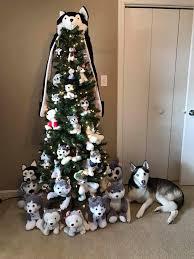 siberian husky tree puppies siberian