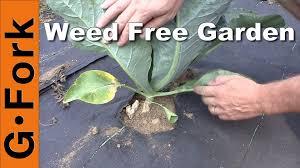 organic weed killer for the garden garden flowguineano