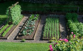 phenomenal how to start a garden impressive ideas starting garden