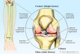 Tendons In The Shoulder Diagram Knee Joint Picture Image On Medicinenet Com