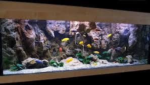 most beautiful freshwater tanks all time ratemyfishtank
