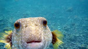 ocan fish images reverse search