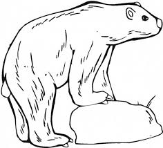polar bear standing ice arctic animals colouring polar