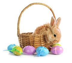 bunny easter basket 199 hd easter basket images for happy easter 2018 free