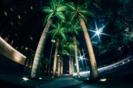 free stock photo of lights palm trees