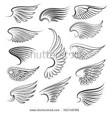 wing stock images royalty free images vectors