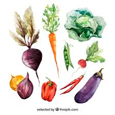 A List Of Root Vegetables - vegetables vectors photos and psd files free download
