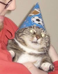 Depressed Cat Meme - whoosh вжух know your meme