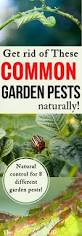 get rid of these common garden pests naturally the free range life